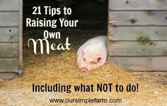Our Simple Farm: 21 Tips to Raising Your Own Meat - Including What Not to Do!