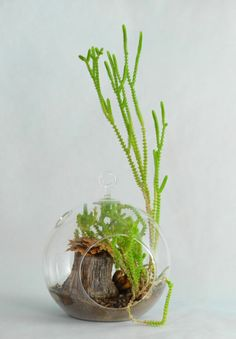 The fairy that lives in this orb takes plays classical music for her plant companion!