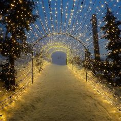 The Light Walk at Grouse Mountain, Vancouver, BC