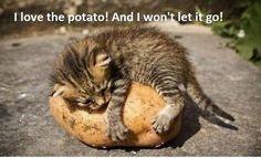 I love the potato and I won't let go :')