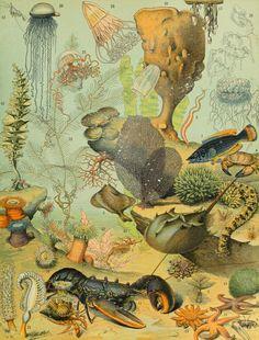 Adolphe Millot, Oceans, Nouveau Larousse illustré, Paris, 1897-1904.- Magic Transistor
