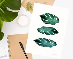 Green monstera botanical art print from original watercolor painting by Annemette Klit. 3 Green Monstera leaves Tropical Plant illustration