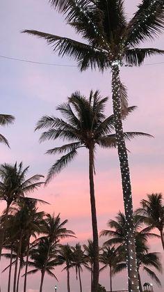 Christmast palms