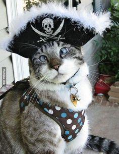 Erwin the pirat