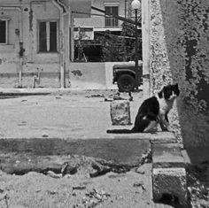 Cat. Kos, Greece.  © Chris Trew / Plastic Cameras 2012