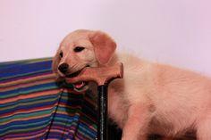 Offrir un animal à une personne âgée, est-ce une bonne ou une mauvaise idée ? http://autonome-a-domicile.com/offrir-un-animal-a-une-personne-agee-bonne-ou-mauvaise-idee/