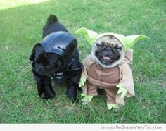 Two cute pugs dressed up in Star Wars costumes as Darth Vader (or should we say Bark Vader) and Yoda.  The Adventures of Darth Pug and Yodog...