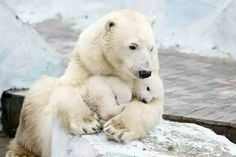 This is the Best Love a Polar Bear Mom Can Give.
