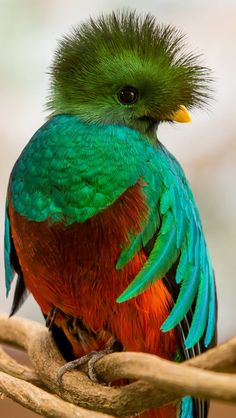 Learn more about El Quetzal through images and related places. El Quetzal offers in-depth chocolate and coffee tours every day. Pretty Birds, Beautiful Birds, Animals Beautiful, Exotic Birds, Colorful Birds, All Birds, Love Birds, Animals And Pets, Cute Animals