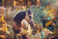 Fairytale Horse by carinamaiwald on DeviantArt