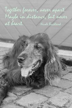 Die 43 Besten Bilder Zu Trauer Hund Trauerarbeit Spruche Trauer