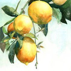 lemon tree by JoaRosa on DeviantArt lemon tree by JoaRosa Lemon Painting, Lemon Watercolor, Fruit Painting, Watercolor Trees, Watercolour Painting, Painting & Drawing, Watercolours, Lemon Art, Fruit Art