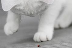 The white cat and the red ladybug.