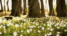 Vivendo a Vida bem Feliz: Primavera de todas as cores e flores!