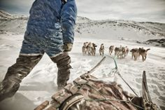 Dog sledding of course - it's Greenland!