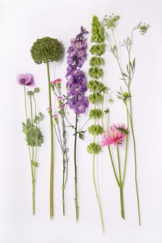 Zomerse bloemen, Papaver, Allium,Anjer,Delphinium, Mollucella,Dahlia, Dille