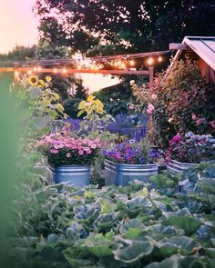 Come experience a luxury farm stay at Evergreen Acres Farm on Bainbridge Island, Washington. See the gardens, animals, and more. Cut Flower Garden, Flower Farm, Country Farm, Country Living, Farm Lifestyle, Farm Stay, Garden Gates, Dream Garden, Garden Inspiration