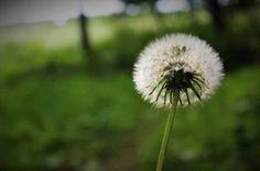 Nuage en fleur forêt joliette