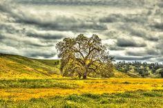 Beautiful HDR image. I love the hills.