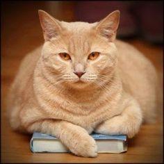 Leggere Libri Fuori Dal Coro : Gatti e Libri Accoppiata Perfetta ( foto. 7 )