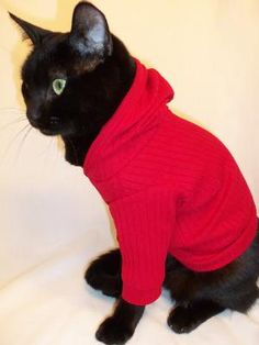 CoolCats Knit Hoodie for Catsseveral colors by Rockindogs on Etsy