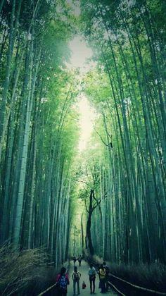 竹林の小径 (Kitasaga Bamboo Grove) - 京都市, 京都府