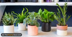 Image of Place these 5 plants near your bed to sleep better than you've ever slept before