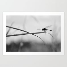 Insect Photography | Dragon Fly | Black and White Photography Art Print