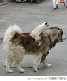 Onward dog!