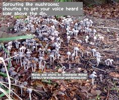 Sprouting like mushrooms; shouting to get your voice heard - soar above the din. Words and photo for reflection by Stephanie Mohan- November 2015