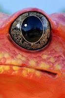 Eye close up art 17 Super Ideas Colorful Animals, Nature Animals, Eye Photography, Animal Photography, Beautiful Eyes, Animals Beautiful, Reptile Eye, Regard Animal, Animal Close Up
