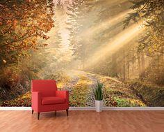 1Wall fototapeta Lesní stezka 360x253 cm / Wallpaper