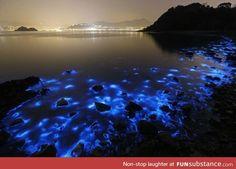 Algae bloom in Chinese Waters