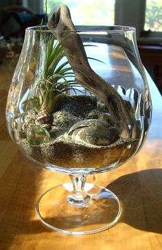 Zen All Natural Driftwood Terrarium with Air Plant Mexico by MyZen, $25.00