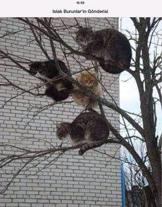 Mart kedileri