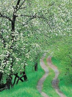 This reminds me of 'White Way Delight' in Anne of Green Gables...Best book series EVER!!!
