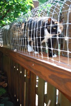 Outdoor cat enclosure with tunnel and multi-level cage.