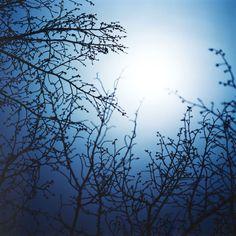 The Moon In The Sun - Asako Shimizu