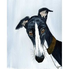 DID YOU CALL?: Cheeky Hound looking with a very innocent look!