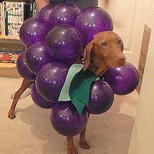 40 Adorable DIY Pet Costume Ideas for Halloween Costumes For Dogs, Animal Halloween Costumes, Dog Halloween, Halloween 2014, Halloween Party, Beagle, Vizsla Puppies, Gatos, Animales