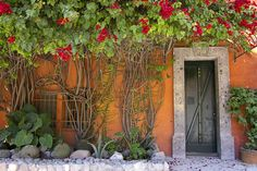 """House with vines San Miguel Mexico"" - photograph by Peter Reid"