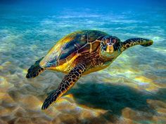 Underwater Sea Turtle Wall Art Tapestries Home Decor Wall Hanging Tapestry Sea Turtle Pictures, Turtle Images, Sea Turtle Facts, Sea Turtle Species, Baby Sea Turtles, Turtle Swimming, Underwater Sea, Turtle Love, Green Turtle