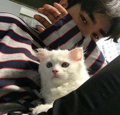 ulzzang 얼짱 boy cat sweater paw cute kawaii adorable korean pretty beautiful hot fit japanese asian soft aesthetic 男 男の子 g e o r g i a n a : 人