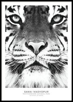 Fotokunst   Foto kunst   Posters met zwart wit fotos   Desenio.nl