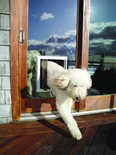 Historically, Mounting A Pet Door In Glass Has Been Nearly Impossible, But  The PlexiDor