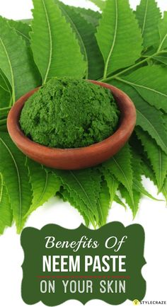 """Also called as the 'wonder leaf', neem has many medicinal uses in Ayurveda. … Also referred to as a """"miracle leaf"""", Neem has many medical uses in Ayurveda. Since there are 10 amazing benefits of neem paste for the skin in skin care Ayurveda, Skin Care Regimen, Skin Care Tips, Skin Tips, Organic Skin Care, Natural Skin Care, Natural Face, Natural Beauty, Organic Makeup"""