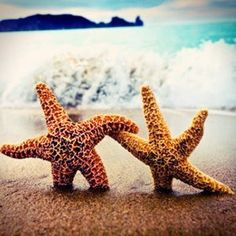 apparently starfish believe in love too. at the very least, they like to hold hands
