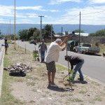 Plantación de árboles platabanda Av. Ramón Correa