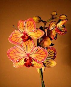 Orquídeas, exótica borboleta