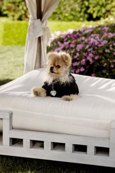 Fluffy little dogs, and Lisa Vanderpump's all dolled up dog is just so cute.